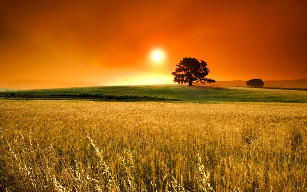 6907734-wheat-field-sunset